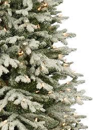 Fraser Christmas Trees Uk by Frosted Fraser Fir Christmas Tree Balsam Hill Australia