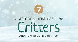 Christmas Tree Has Aphids by Common Christmas Tree Bugs And How To Get Rid Of Them
