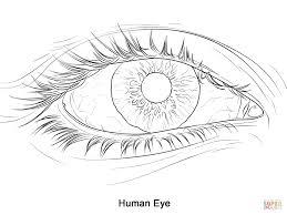 Human Eye Coloring Page
