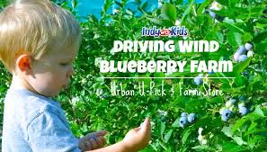 Best Pumpkin Patch Indianapolis by Best Places To Pick Your Own Strawberries In Indianapolis Indy