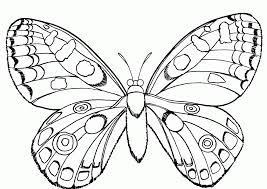 Butterfly And Insect Coloring Pages Kids