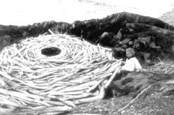 In This Contemplative And Beautifully Insightful Film We See Goldsworthy As He Works To