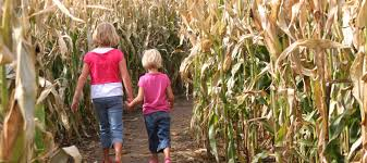 Halloween Mazes In Los Angeles by 5 Corn Mazes To Explore This Fall In Los Angeles Mommy Nearest