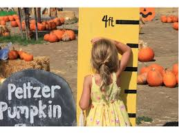 Pumpkin Patch With Petting Zoo Inland Empire by Traditional Temecula Pumpkin Festival Opens Sunday Temecula Ca