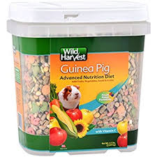 Can Guinea Pigs Eat Salted Pumpkin Seeds by Amazon Com F M Brown U0027s Tropical Carnival Guinea Pig Food 5