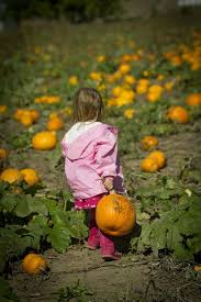 Pumpkin Picking In Ct by Best Fall Activities In New Haven Ct