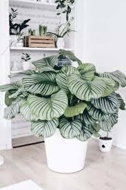 schöne zimmerpflanzen mit bunten blättern als farbtupfer im