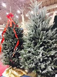 Fraser Christmas Tree Cutting by Cartner Christmas Tree Farm Buy Wholesale