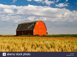 Old Red Barn Next To Wheat Field, Near Elrose, Saskatchewan ... Old Red Barn Kamas Utah Rh Barns Pinterest Doors Rick Holliday Learn To Paint An Old Red Barn Acrylic Tim Gagnon Studio Panoramio Photo Of In Grindrod Bc Fading Watercolor Yvonne Pecor Mucci Rural Landscapes In Winter Stock Picture I2913237 Farm With Hay Bales Image 21997164 Vermont With The Words Dawn Till Dusk Painted Modern House Design Home Ideas Plans Loft Donate Northern Plains Sustainable Ag Society Iowa Artist Paul Roster Artwork Adventures