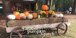 Pumpkin Patch Houston Tx Area by Paradise Pumpkin Patch Home Paradise Pumpkin Patch