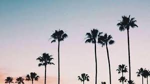 Unique Hd Wallpapers For IPhone 5 Tumblr Cali California Love It Palm Trees Palmas Palms