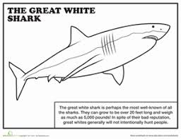 First Grade Coloring Worksheets Great White Shark Page