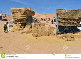 Straw Hay Bales, Morocco Editorial Stock Photo. Image Of ... Rapid Relief Team Hay From Tasmania To Local Farmers Goulburn Post Trucks Wagon Lorry Rig Tractors Hay Straw Photos Youtube Hay Trucks For Hire Willow Creek Ranch Hauling Bales Hi Res Video 85601 Elk161 4563 Morocco Tinerhir Trucks Loaded With Bales Of Stock Wa Convoy Delivers Muchneed Droughtstricken Nsw Convoy Heavily Transporting Over Shipping And Exporting Staheli West Long Haul As Demand Outstrips Supply The Northern Daily Leader Specialized Trailer On Wheels For Transportation Of Custom And Equipment Favorite Texas Trucking