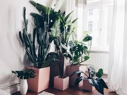 welcome to the jungle liebesbrief an 7 tropische pflanzen