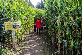 Seattle Pumpkin Patch For Adults by Your Guide To Fall Activities In Seattle