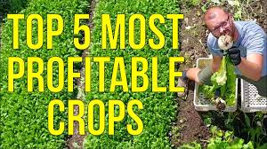 My 5 Most Profitable Crops - YouTube Bring The Farm To Your Backyard Innovation Smithsonian Guide Growing Rice Southern Exposure Seed Exchange Simple Vegetable Garden Monoculture Farming Has Been Taking A Toll On Farm Soil Hemp With Cabbage In Burgundy In Our A Weekend Willamette Valley 5 Cash Crops You Can Grow Gtblog Cowpea Annual Crop Stock Photo Picture And Plant And Manage Cover For Maximum Weed Suppression Extension Greenhouse Ftilizer Plants Flowers Landscaping Frontyard Three Things Very Dull Indeed Corn Backyard 2016 Weeks