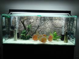 Spongebob Aquarium Decorating Kit by 28 Modern Fish Tanks That Inspire Relaxation Fish Tanks Modern