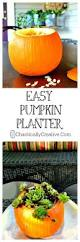 Boyd Tx Pumpkin Patch by 83 Best Diy Fall Decor Indoor Images On Pinterest Fall Diy