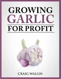 gourmet garlic profitable plants digest
