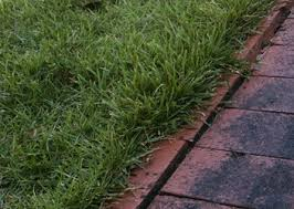 Carpet Grass Florida by Zoysia Grass Lawns