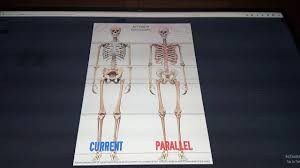 Berenstain Bears Halloween Youtube by Https Www Youtube Com Watch V U003d86askh2gxzy Proof Of Human Anatomy