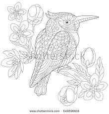 Coloring Page Of Australian Kookaburra Kingfisher Bird Sitting On Cherry Blossoming Tree Branch
