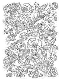 Framed Nautical Shells Print