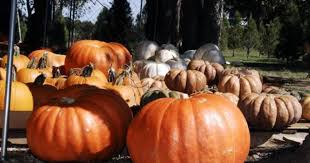 Pumpkin Patch Waco Tx 2015 by Silo Christmas Tree Farm Upcoming Events In Temple On Do512