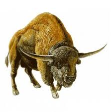 prehistoric bison with long horns and wide skull Canadian couple