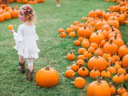 Pumpkin Patch Houston Tx Area by 8 Top Pumpkin Patches In Texas Tripstodiscover Com