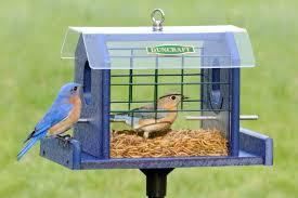 Duncraft Duncraft Bluebird Haven Feeder