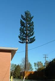 Pine Tree Cell Phone Tower Durham North Carolina Disguised Cell Towers on Waymarking