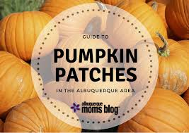 Mccalls Pumpkin Patch Albuquerque Nm by 2017 Guide To Pumpkin Patches In The Albuquerque Area