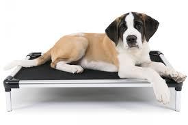 Kuranda Dog Beds by Cujo Cot Raised Aluminum Bed Chew Proof Dog Beds
