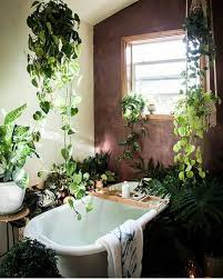 Best Plant For Bathroom by Best 25 Bathroom Plants Ideas On Pinterest Best Bathroom Plants