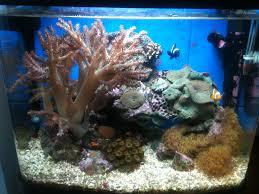 aquarium nano eau de mer petit aquarium eau de mer poisson naturel