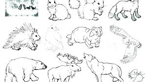 Wild Animal Coloring Pages Animals Winter
