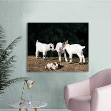 Animal, Wall Decals Cute Adorable Baby Sibling Goats Playing ... Decal Baby On Board Stroller Buy Vinyl Decals For Car Or Interior Animal Wall Decals Cute Adorable Baby Sibling Goats Playing Stars Rainbow Colors Ecofriendly Fabric Removable Reusable Stickers Welcome To Our Wedding Custom Personalized Couple Sign Mirror Glass Sticker Feather Living Room Nursery Bedroom Decor Wh Wonderful Mariagavalawebsite Costway 3 In 1 High Chair Convertible Play Table Seat Booster Toddler Feeding Tray Pink Details About The Walking Dad Funny Car On Board In Bumper Window Atlanta Cornhole Decalsah7 Hawks Vehicle Nnzdrw5323 The Best Kids Designs Sa 2019 Easy Apply Arabic Alphabet Letters