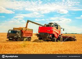Harvester Wheat Field Pouring Grain Truck — Stock Photo ... 1949 1953 Chevrolet 2 12 Ton Grain Truck 1983 Ford F700 Sa Grain Truck 1940 32500 Classic Cars In Plano Dont 1959 C60 Farm For Sale Havre Mt 9274608 Intertional Loadstar V12 Fs2017 Farming Simulator Man 26364 Grain Trucks For Sale From Lithuania Buy Truck Wk13556 Trucks Simulator 2017 Lot 1078 1965 Intertional Fleetstar 1900 Lvo Fh16 1974 Gmc Model 6000 Huggy Bears Consignments Appraisals 1854 Truck19812 Stewart Farms Mi