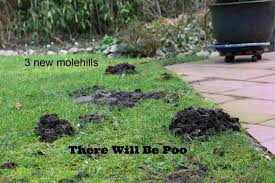 Mole Wars - Album On Imgur How To Get Rid Of Moles Organic Gardening Blog Cat Captures Mole In My Neighbors Backyard Youtube Animal Wikipedia Identify And In The Garden Or Yard Daily Home Renovation Tips Vs The Part 1 Damaging Our Lawn When Are Most Active Dec 2017 Uerstanding Their Behavior Mole Gassing Pests Get Correct Remedy Liftyles Sonic Molechaser Alinum Covers 11250 Sq Ft Model 7900