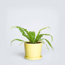 Best Plant For Your Bathroom by Bathroom Breathtaking Cool Best Low Maintenance Plants To Put In