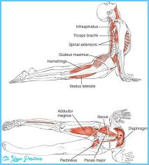 Tag Yoga Poses And Benefits Chart Anatomy Of An Asana