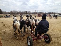 Amish Horses: Amish Horses For Sale Amish Horses April 2016 For Sale Featured Listings Kalona Homes For Property Search In Single Familyacreage Sale Iowa 20173679 Tours Chamber September 2014 Ia Horse Auction Pictures Of Amana Colonies Day Trip To Girl On The Go