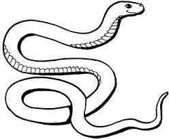 Best Natural Designs In Snake Coloring Pages