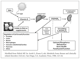 vitamin d is a fat soluble pro hormone obtained from dietary