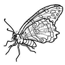 Chrysalis Clipart Black And