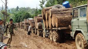 100 Log Trucks Illegal Timber Trade Destroying Myanmars Forests Uncovered In New