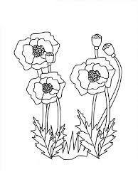 Poppy Flower Coloring Pages 15