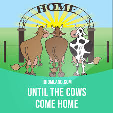 """Until the cows e home"" means ""for a very long time"""