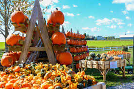 Pumpkin Picking Long Island Ny by Have The Best Long Island Fall Long Island Pulse Magazine